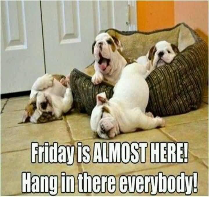 Almost Friday Meme Funny Image Photo Joke 11