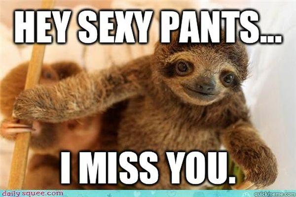 Amusing cool sloth love meme picture