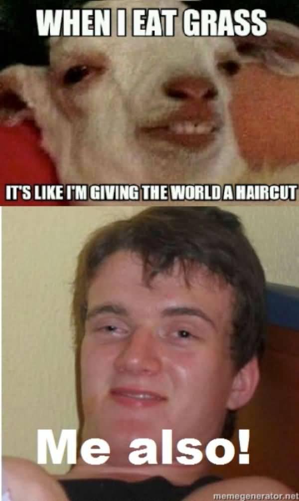 Amusing stoner meme joke