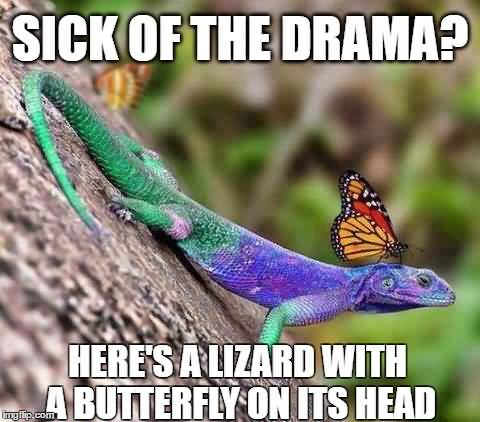 Butterfly Meme Funny Image Photo Joke 09