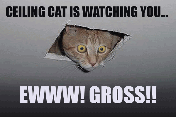 Ceiling Cat Meme Funny Image Photo Joke 02