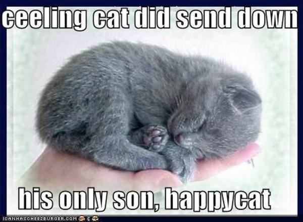 Ceiling Cat Meme Funny Image Photo Joke 03