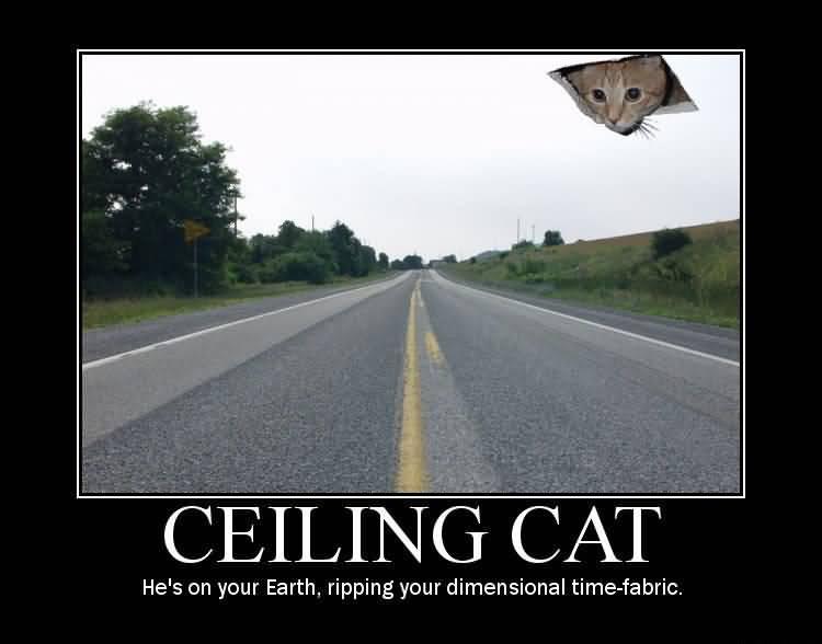 Ceiling Cat Meme Funny Image Photo Joke 06