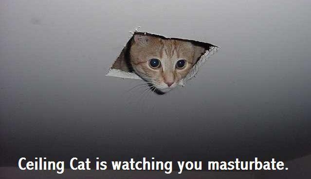 Ceiling Cat Meme Funny Image Photo Joke 12