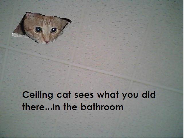 Ceiling Cat Meme Funny Image Photo Joke 13