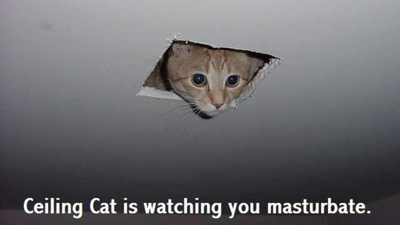 Ceiling Cat Meme Funny Image Photo Joke 14