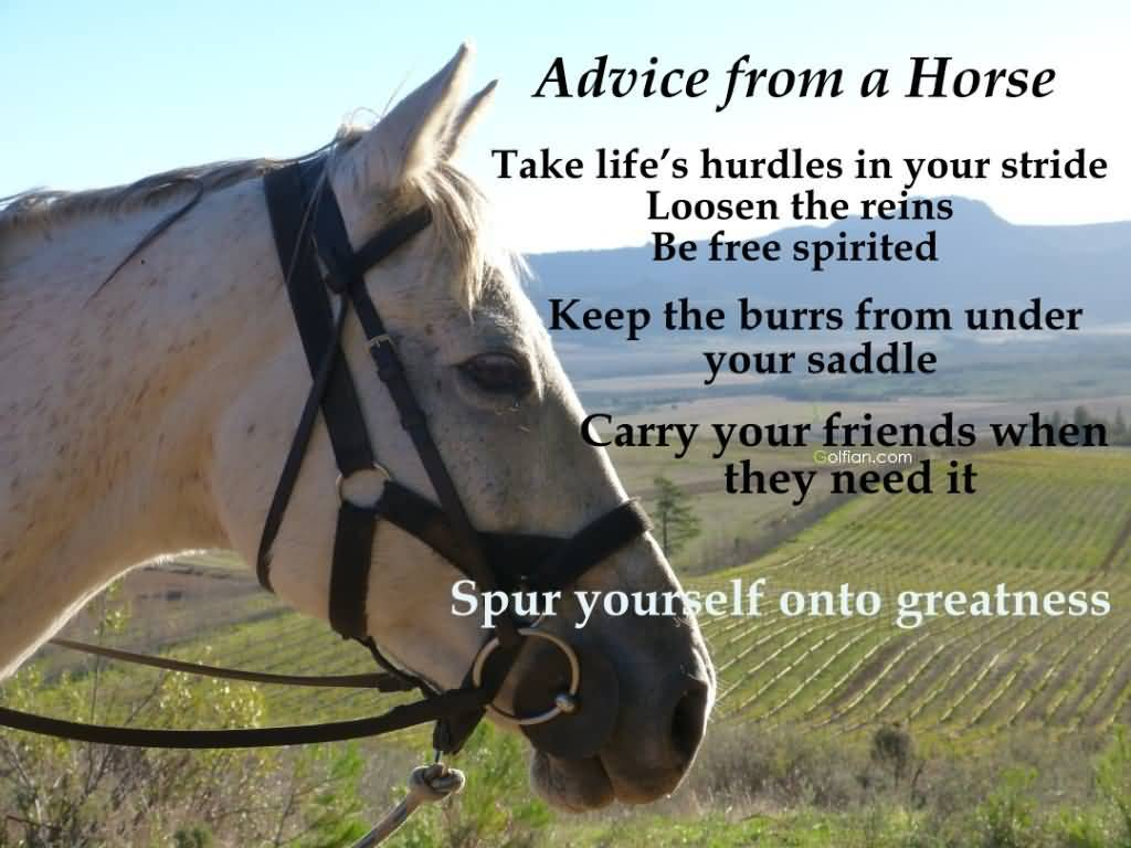Cute Horse Quotes: 25 Cute Horse Quotes Sayings Pictures & Images