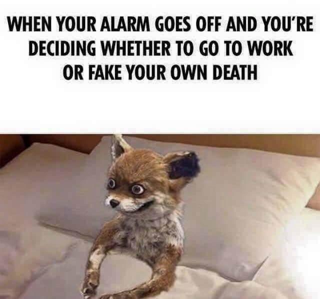 Fox Meme Funny Image Photo Joke 09