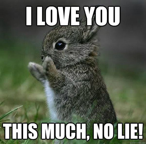 Funniest love meme pictures photo