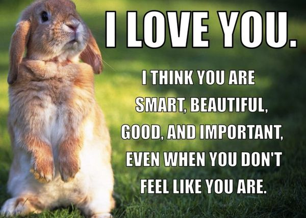 I Love You Meme Funny For Her : 50 top romantic memes for her and him pictures quotesbae