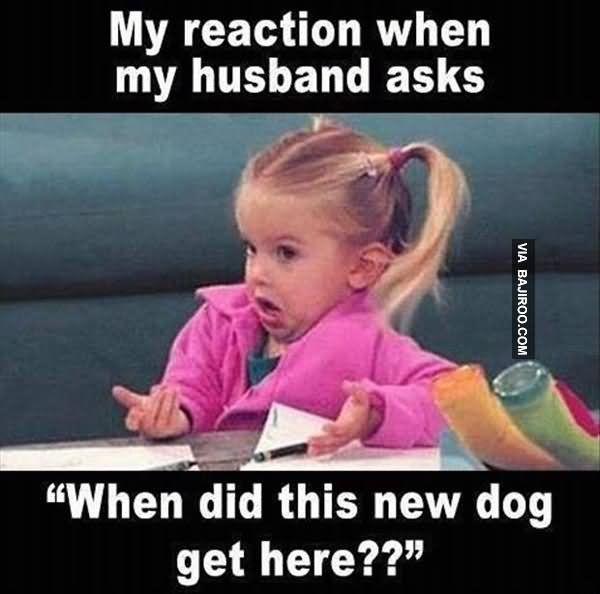 Funniest love my husband meme joke