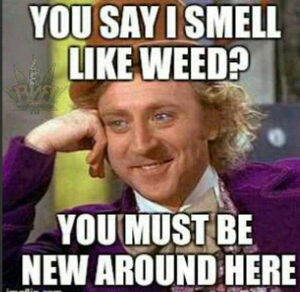 Funniest pothead meme picture