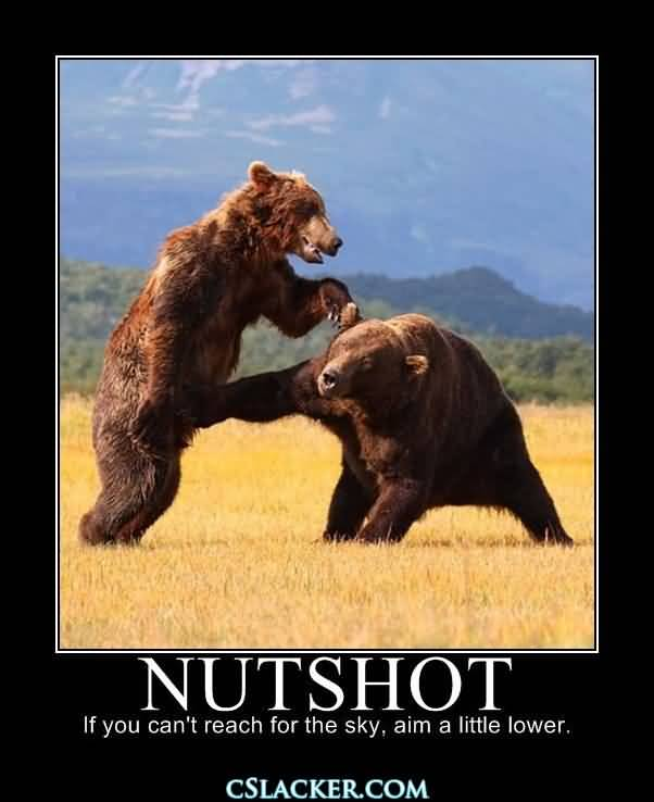 Witty Quotes With Pictures: 25 Funny Bear Quotes And Sayings Images
