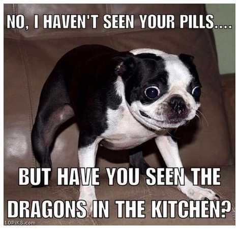 Funny Memes 2016 Funny Image Photo Joke 08