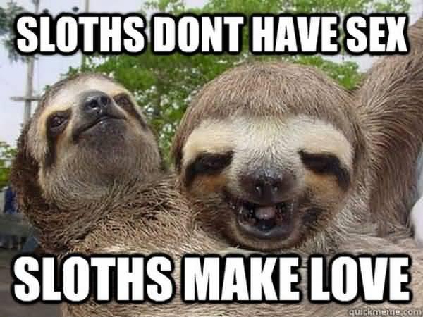 Hilarious sexual sloth meme photo