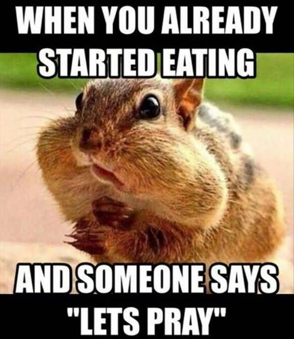 Hilarious squirrel images funny memes joke