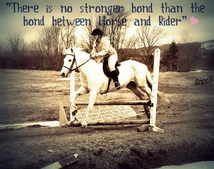 Horse Jumping Quotes Meme Image 08 | QuotesBae