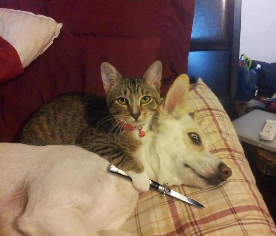 Knife Cat Meme Joke Image 01
