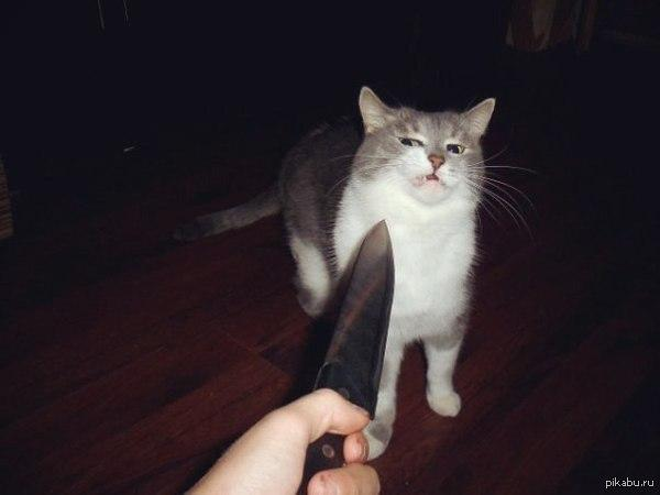 Knife Cat Meme Joke Image 05