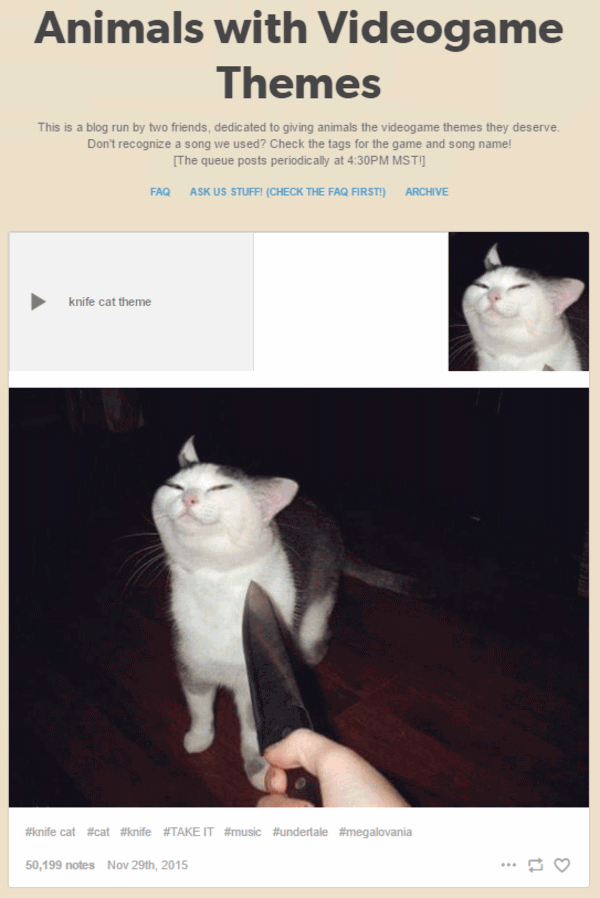 Knife Cat Meme Joke Image 10