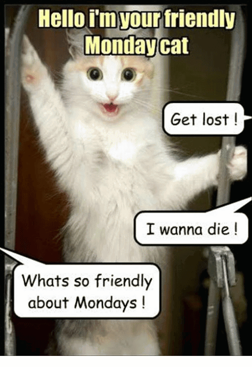 Monday Cat Meme Funny Image Photo Joke 02