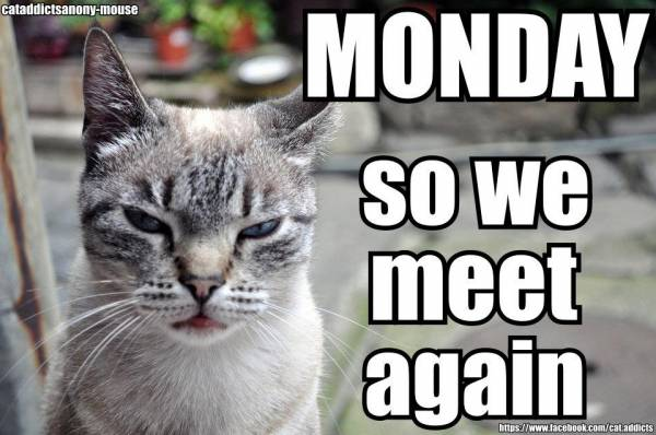 Monday Cat Meme Funny Image Photo Joke 07