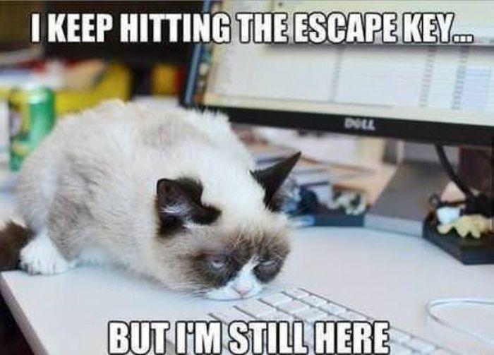 Monday Cat Meme Funny Image Photo Joke 14