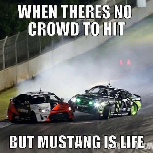 Mustang Meme Image Photo Joke 03