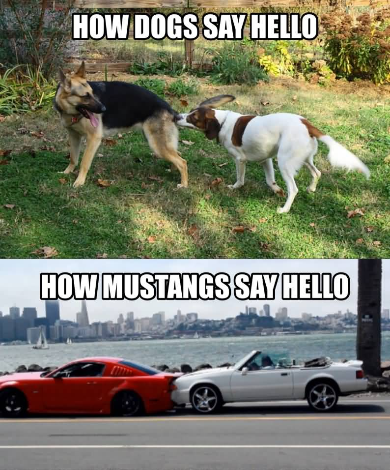 Mustang Meme Image Photo Joke 04