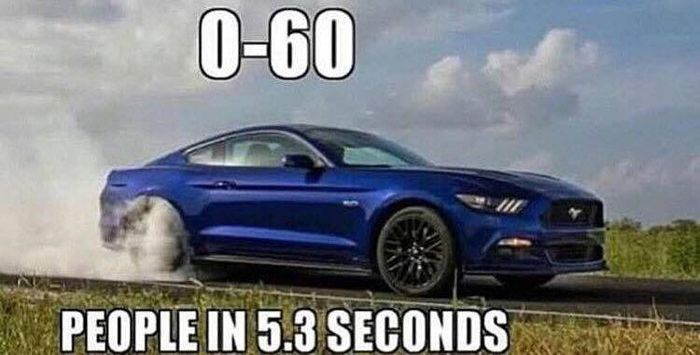 Mustang Meme Image Photo Joke 07
