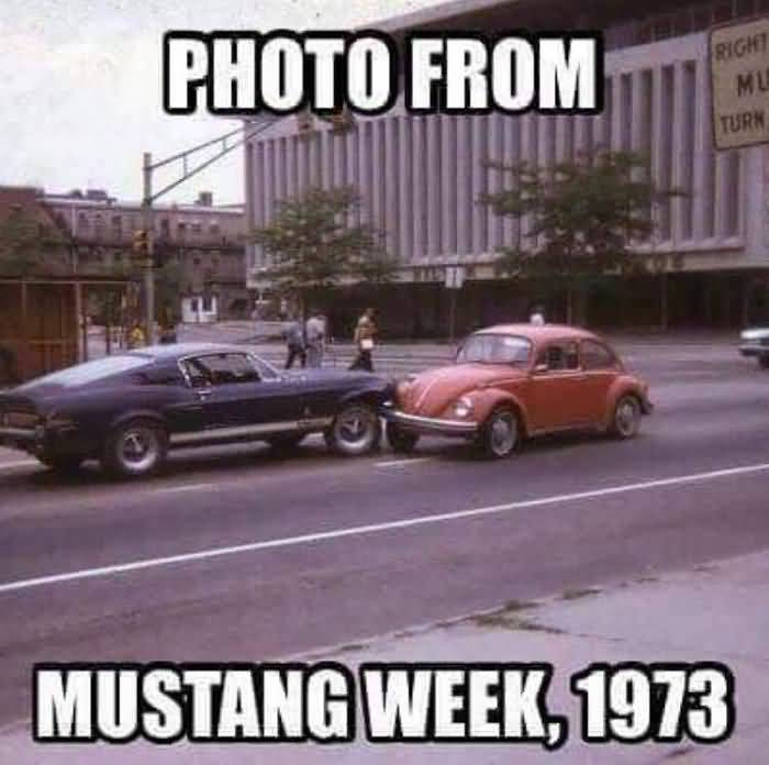 Mustang Meme Image Photo Joke 08
