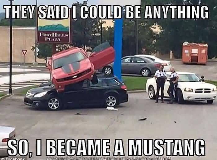 Mustang Meme Image Photo Joke 09