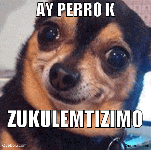 Perros Meme Funny Image Photo Joke 02