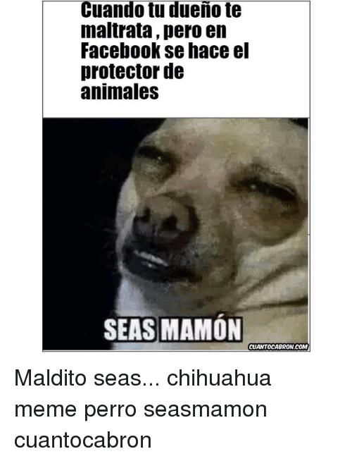 Perros Meme Funny Image Photo Joke 06