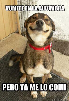 Perros Meme Funny Image Photo Joke 13