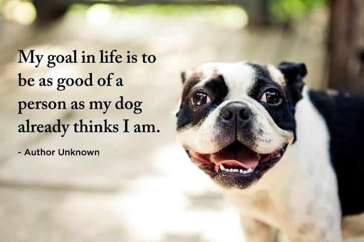 Quotes About Pets Meme Image 08