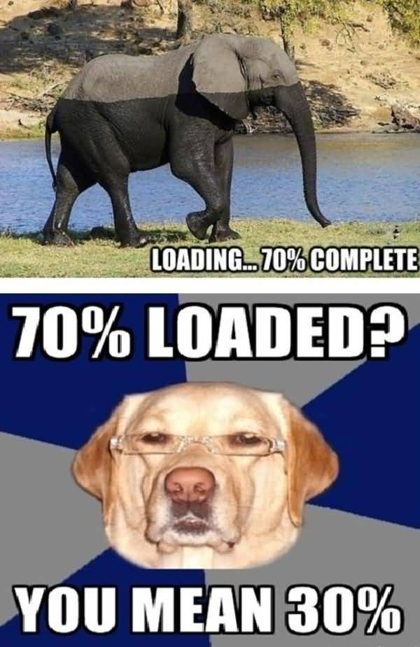 Racist Dog Meme Funny Image Photo Joke 12