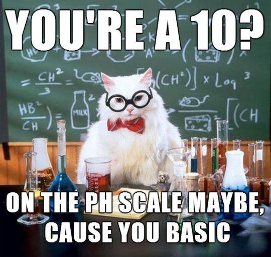Science Cat Meme Funny Image Photo Joke 12