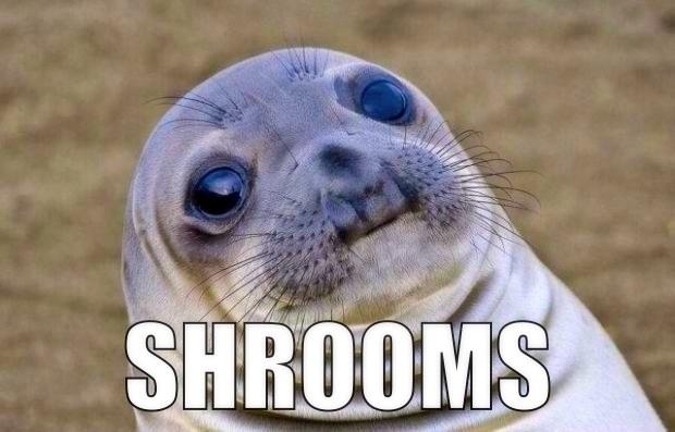 Shrooms Meme Funny Image Photo Joke 05