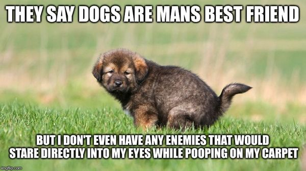 Very Funny Dog Poop Meme Image Quotesbae