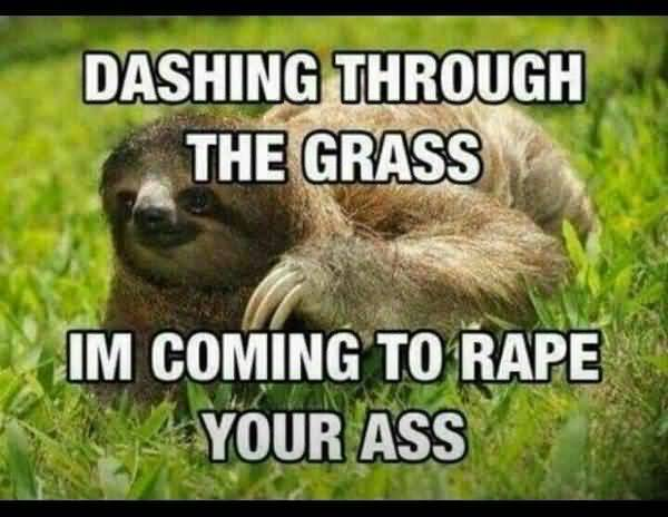 Very funny perverted sloth memes image