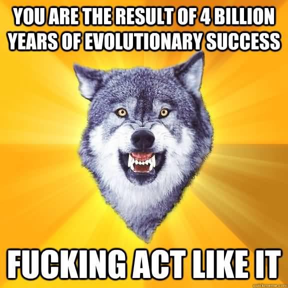 Wolf Meme Funny Image Photo Joke 13