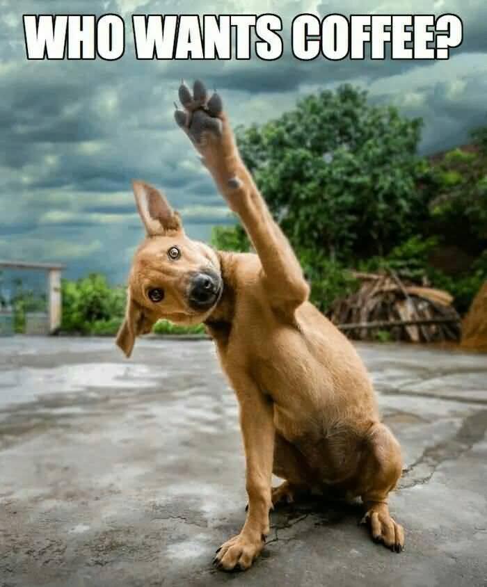 Funny Coffee Meme Image Photo Joke 04