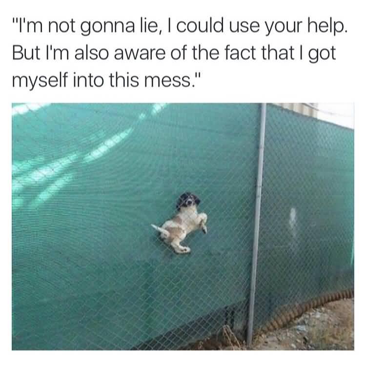 Funny Dank Meme Image Photo Joke 11