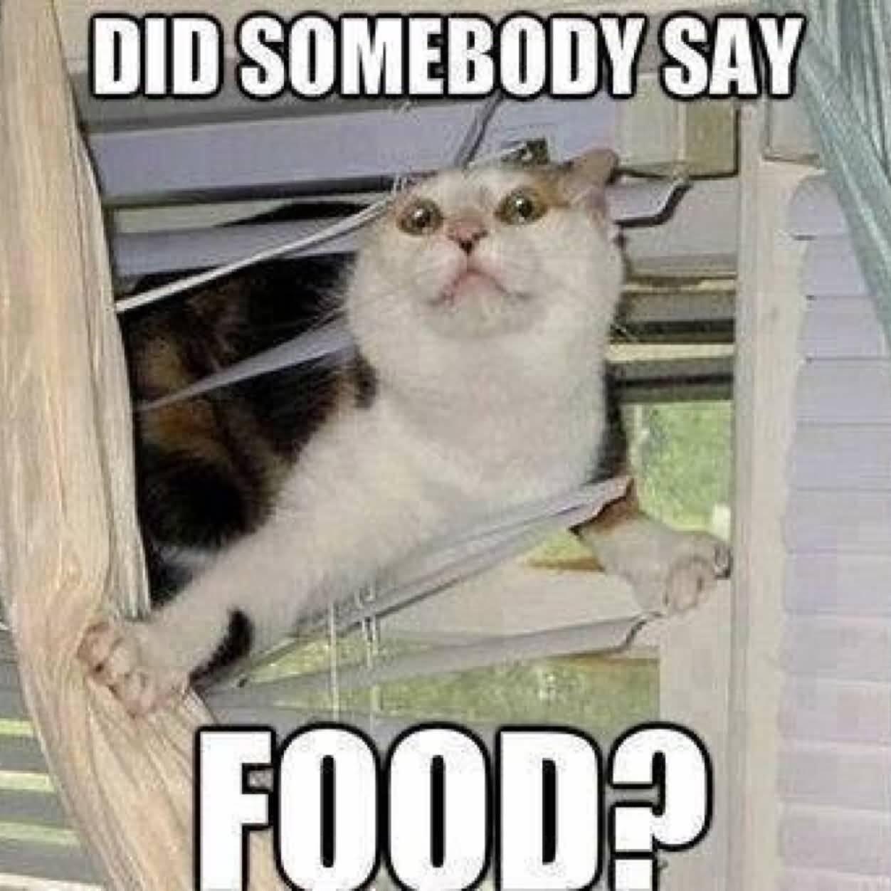 Funny Food Meme Image Photo Joke 10