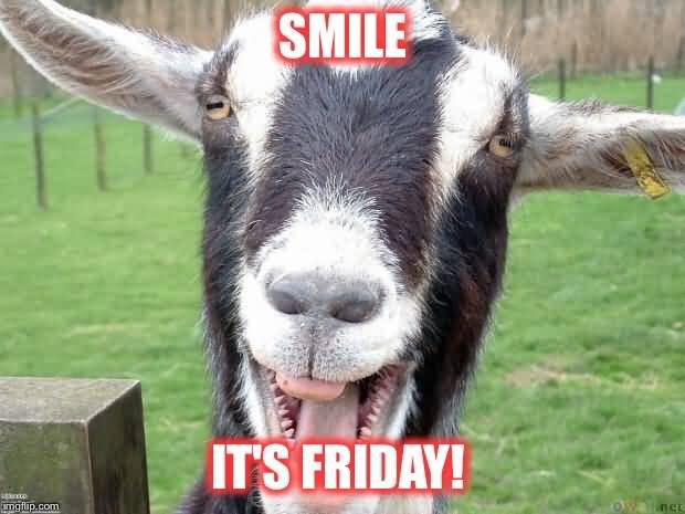 Funny Goat Meme Image Photo Joke 01