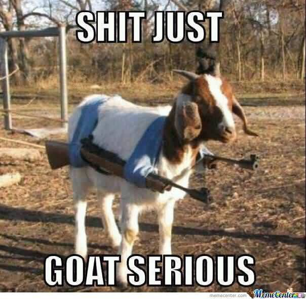 Funny Goat Meme Image Photo Joke 03