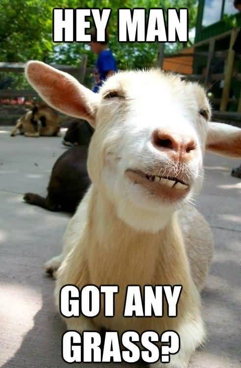 Funny Goat Meme Image Photo Joke 08