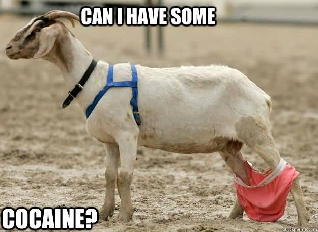 Funny Goat Meme Image Photo Joke 10