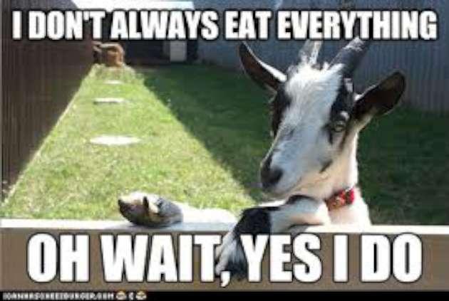 Funny Goat Meme Image Photo Joke 12